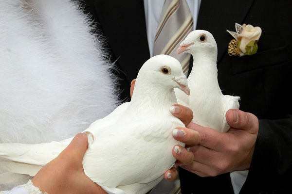 Bride And Groom Holding A Couple Of Dove In Their Hands - Representing The Symbol Of Love.